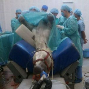 Dr. Cesar in surgery